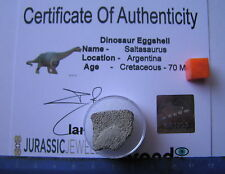 GORGEOUS BOXED  PIECE OF FOSSIL SALTASAURUS DINO EGGSHELL - WITH CERTIFICATE