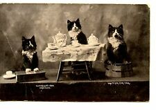 Cute Tuxedo Kitty Cats-Wait for Tea at Table-Dishes-Greeting Vintage Postcard