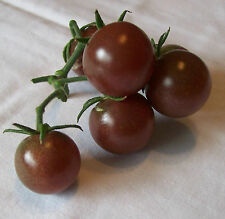Tomato Seeds - BLACK CHERRY - Novelty Tomato Variety - Gmo Free - 10 Seeds