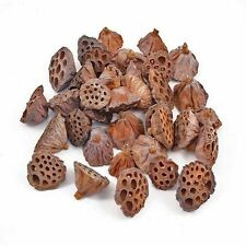Dried Lotus heads small seed pods 6-8 cm diameter Pack of 30