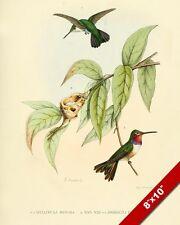 HUMMING BIRDS & NEST IN TREE BRANCH PAINTING BIRD AVIAN ART REAL CANVAS PRINT