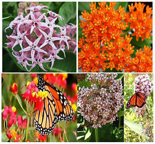 (4 Types) MONARCH BUTTERFLY Seed Collection Set - Butterfly Weed Milkweed SEEDS