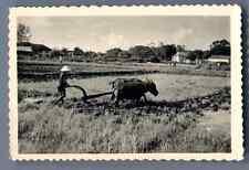 Vietnam, Indigène labourant la terre  Vintage silver print.  Tirage argentique