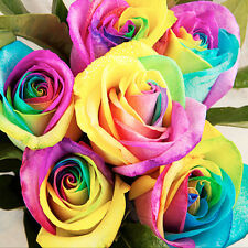Colorful Rainbow Rose Seeds 100pcs Fit Planting at Home/Garden Pretty Rose Decor