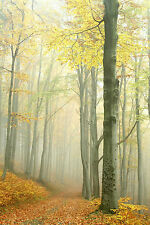 STUNNING AUTUMN FOREST LANDSCAPE CANVAS #341 QUALITY A1 CANVAS PICTURE WALL ART