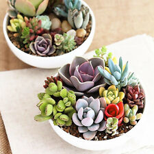 150x Mix Office Potted plants Flowers Succulents Radiation protection Plant Seed