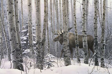 CANVAS ART - A Walk In The Woods by Stephen Lyman Moose Wildlife Forest 16x22