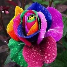 20Pcs Multi-color Flower Plant Seeds Rainbow Rose Seeds Lover Garden Auction
