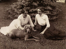 WEIMARANER CHARMING DOG GREETINGS NOTE CARD TWO EDWARDIAN LADIES AND THEIR DOG