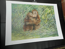 JOEL KIRK LARGE LIMITED EDITION PRINT ORANGATANS  VGC LOW POST