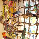 Parrot Birds Pet Rope Net Swing Ladder Chew Toys Parakeet Climbing Net Play Gym