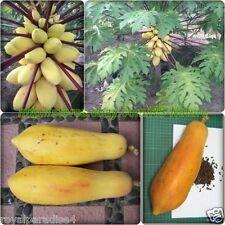 Thailand Golden Papaya Seeds Imported Good Growing Papaya 10 Seeds Pack