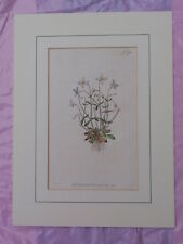 ANTIQUE 1797 PUBLISHED BY W CURTIS ST GEORGE CRESCENT BOTANICAL MOUNTED PRINT