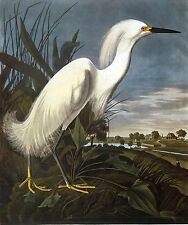 Audubon: Birds of America: Snowy Egret Aviary Painting: Fine Art Canvas Print