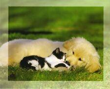 Ansichtskarte:  Golden Retriever schmust mit Katze - dog and cat - chat et chien
