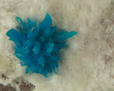 "2"" Vibrant Turquoise Blue PENTAGONITE Spiky Crystals on Quartz India for sale"