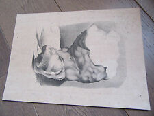 GRAVURE 1880 LITHOGRAPHIE BUSTE