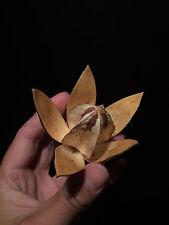 Decoration naturelle Cabinet de curiosités Fleur de Lys sauvage seche d'Inde!