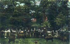 Ansichtskarte Gruß aus Wildgehege Tuppelburg Tupelín bei Teplitz um 1910