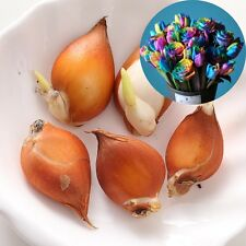 BonsaiTulip Seeds DIY Home Garden Flower Outdoor Indoor Potted Plants Seeds