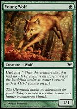 *MRM* FR 2x Louveteau - Young wolf MTG Dark ascension