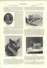 1896 Some Famous Cats Champion Jimmy Patrick Blue Bicycle For 25 Persons