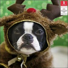 Pack of 5 Festive Dog Prince's Trust Charity Christmas Cards Xmas Card Packs