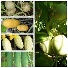 Beliebte Gurkensamen,popular cucumbers, 5 Arten,50 Samen,seeds,getrennt verpackt
