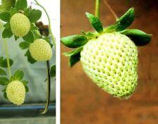 gelbe Erdbeeren Obst Gemüse für das Zimmer exotische Pflanzen Sträucher Dekoidee