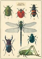 Insect Chart Large Format  Poster Cavallini & Co 20 x 28 Wrap