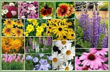 Wildflower All Perennial Mix 500 Seeds  Garden Seeds 2u