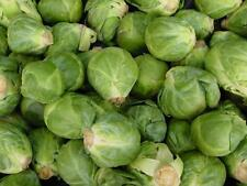 Brussel Sprouts, LONG ISLAND IMPROVED 100 Heirloom, Non-gmo, Seeds FREE SHIPPING