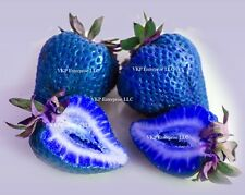 60+ Blue Strawberries Non GMO Organically Grown in the USA & Harvested