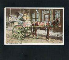 postcard Woman Horse Drawn Milk Delivery Wagon in New Orleans LOUISIANA