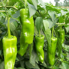20 Greek Pepper Vegetable Seeds Seeds DIY Your Vegetable Garden TT403