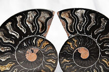 "RARE 1 in 100 BLACK Ammonite Cut Pair 99mm Deep Crystals LARGE 3.9"" 110myo n1407"