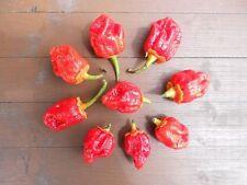 Bubblegum Chili das Weihnachtsgeschenk für harte Männer den Mann Jungs Buben Opa