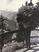 Stereoscope - Mountain Path Ledge Of The Stanserhorn to the Alps
