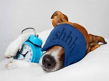 JACK RUSSELL DOG SLEEPING ALARM CLOCK FACEMASK PHOTO ART PRINT POSTER BMP2039A