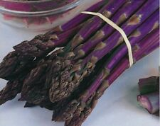Asparagus Seeds - PACIFIC PURPLE - Thick Spears - Delicious Flavour - 40 Seeds