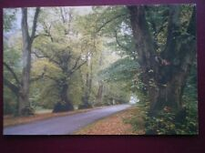 POSTCARD SUFFOLK SANTON DOWNHAM - LIME TREE AVENUE