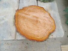 Baumscheibe, Holzscheibe, 40x 3 cm, Erle