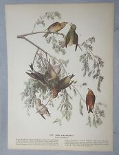 1942 Audubon #197 Red Crossbill & #198 Swainson's Warbler Full Color Lithograph