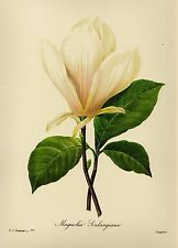 Botanical Print White Magnolia Flower Gallery Wall Art Farmhouse Decor pjr 2013