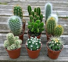 Set of 3 Mixed Cactus/Cacti Plants In 5.5cm Pots