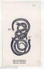 Schlangen-Snakes-Reptilien - Lithographie 1832 Blindschleichen