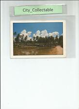 P219 # MALAYSIA USED PICTURE POST CARD * VILLAGE/KAMPUNG SCENERY - COCONUT TREES