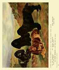 A4 Photo Dog 1911 Lilian Cheviot Cocker Spaniels Print Poster