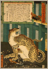 Japanese Print Reproductions: A True Picture of a Tiger: Fine Art Print