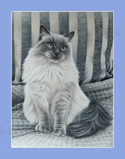 Ragdoll Cat Pearl Grey Print by I Garmashova